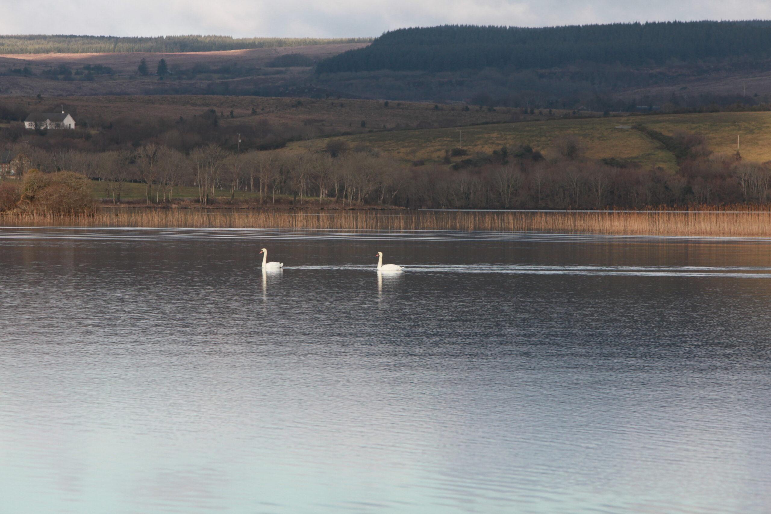 Lough McNean Glenfarne Woods